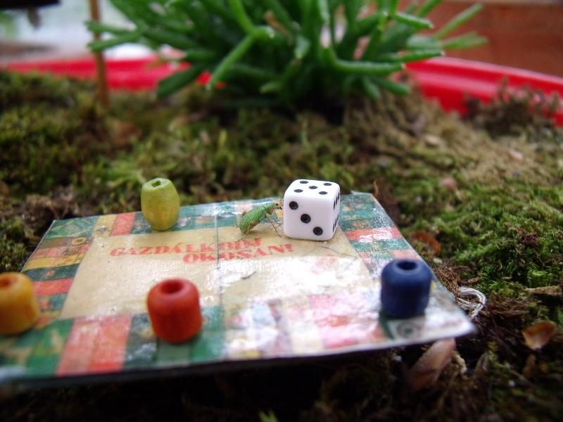 joba katalin miniature garden