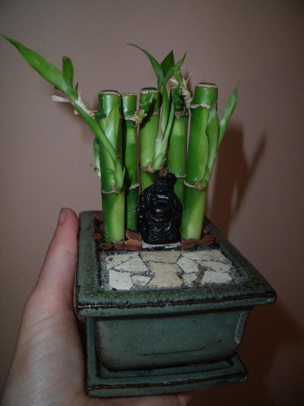 miniatűr buddha szentély