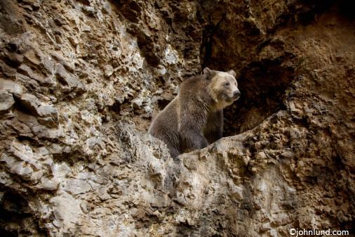 medve barlang február 2