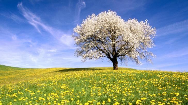 fák virágok