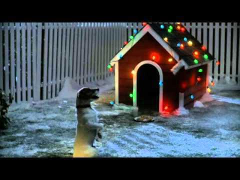 animal wellness santa