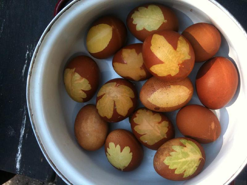 husveti tojasok