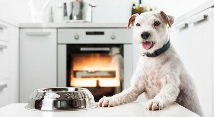 Kutya a konyhában