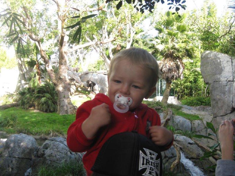 Shane az állatkertben - a GORILLA jelét mutatja