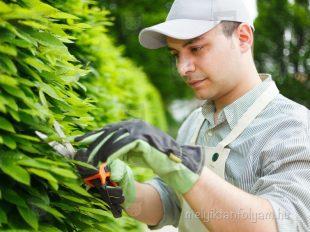 Mezőgazdasági OKJ képzések