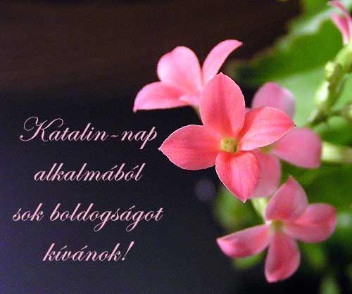 boldog névnapot katalin Boldog Katalin napot! :)   Derűlátó boldog névnapot katalin